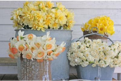 Can I mix daffodils with other flowers in a vase?