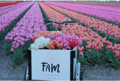 Blogs about visiting our tulip fields