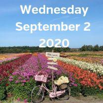 Visit dahlia fields 2 September 2020