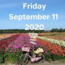 Visit dahlia fields 11 September 2020