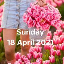 Visit tulip fields 18 april 2021