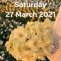 Visit narcissus fields 27 March 2021