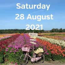 Visit dahlia fields 28 August 2021