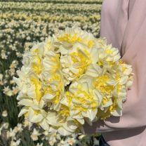 Double flowered Westward