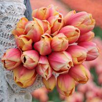 Pink Tulip Marit
