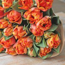 A big bunch of tulipa 'Choice'