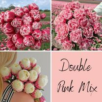 Mix of 3 double pink tulips