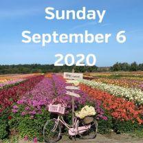 Visit dahlia fields 6 September 2020