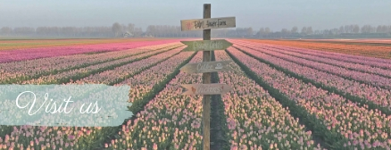 Visit our flower fields: tulips, dahlias and daffodils